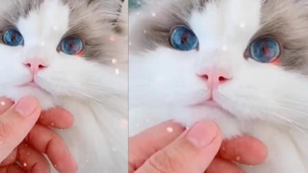 网络红猫咪,颜值逆天眉清目秀,网友:疯了,居然喜欢上了一只猫!
