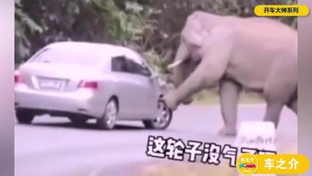 大象:司机,还有空位吗?