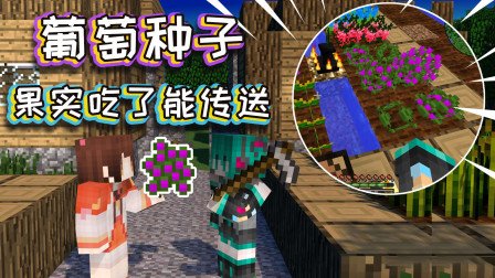 【游戏真好玩】我的世界:葡萄你吃过吗 比紫颂果还厉害 吃完能直接传送到头顶的方块