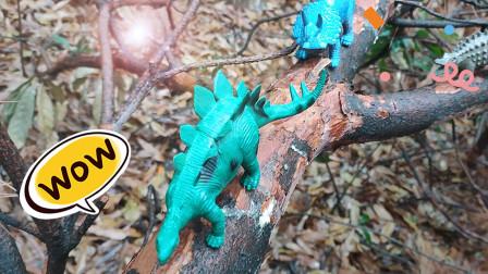 认识剑龙等5种恐龙