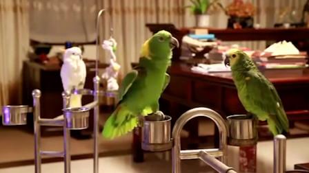 鹦鹉学会猫叫后跟三只猫吵架,忍住别笑,镜头拍下搞笑全过程