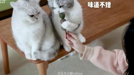 小猫试吃猫薄荷糖葫芦,一张嘴就啃得稀烂,主人:这也太狠了!