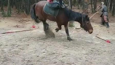 真的心疼这匹马