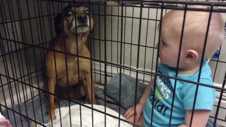 宝宝强行霸占狗狗的笼子一人一狗互不退让狗狗惹不起