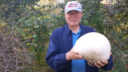 """小哥野外捡到""""巨型蘑菇"""",回家切开后,发现白白捡到18万!"""