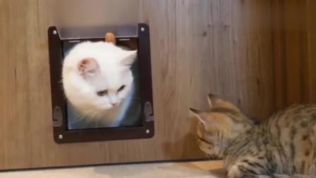 小猫学习钻猫门,大猫:看好了,我只教一次