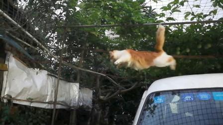 【捡猫】记录第二百五十天,当计算出现错误!