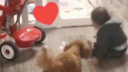 """狗狗真尽职:看到刚""""越狱""""的宝宝,下一秒就被狗子赶回去了!"""