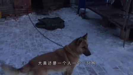 看看东北的狗子好像不怕冷,主人给狗子铺棉被,狗子傲娇的还不要