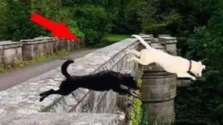 """600只狗在鬼桥""""自杀"""",专家赶来查看,发现桥"""