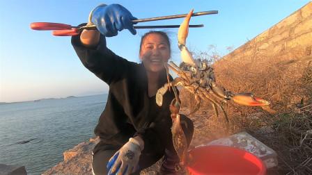 渔妹海边收蟹笼,诱饵太香引来不少海货,钳子掉了赶紧带回家抢救