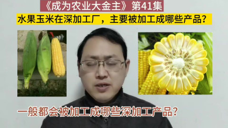 第41集 水果玉米被深加工厂家收购后,主要被加工成哪些产品呢?专家告诉你