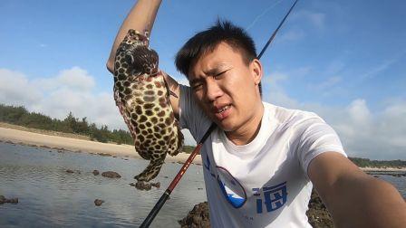 """运气爆棚钓到一条几百块一斤的""""豹纹石斑鱼""""海鲜界的刺身极品"""