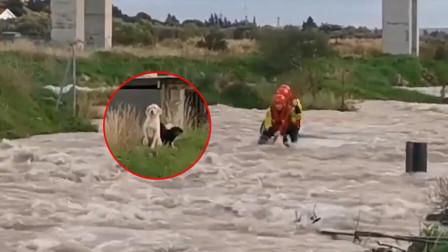 四只狗狗遭主人抛弃被困洪水中 消防员艰难营救