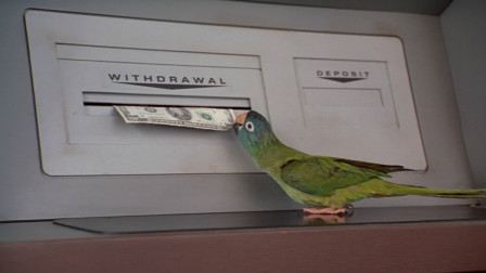 小鹦鹉被主人抛弃,为了回家它学会在银行取钱,一部动物冒险电影