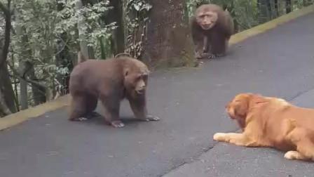 一狗独战俩猴
