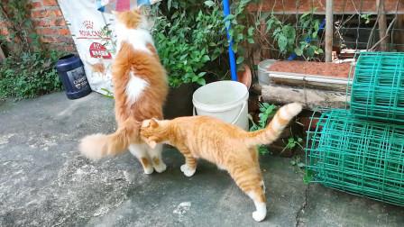 【捡猫】记录第二百五十六天,铛铛你在干嘛!