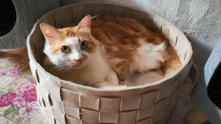 【捡猫】记录第二百六十天,满满一盆咪咪!