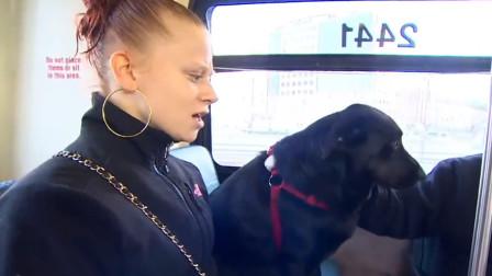 """每天搭公交""""上班""""的狗,还会刷公交卡,网友:这波操作佩服!"""