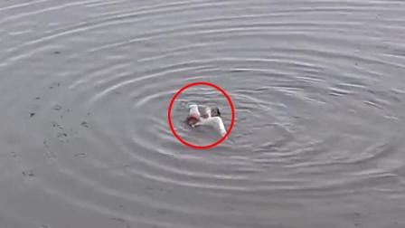 罕见!西班牙一章鱼用触角缠住海鸥拖进水里