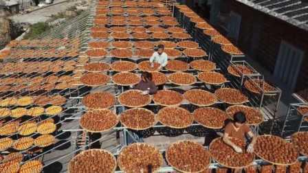 场面壮观!柿子丰收4万多斤,老伯晒室外做柿饼