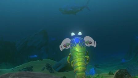 海底大猎杀:皮皮虾敢挑战巨齿鲨 被一口秒了