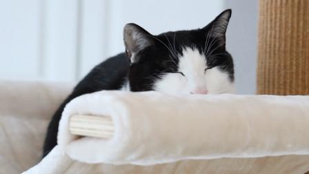 家里的监控很到位,本来以为分哥不刨猫砂,还是老老实实的刨了