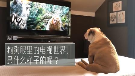 狗狗眼里的电视画面,是什么样子的?