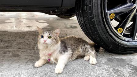 实验:汽车vs小猫 超大棒棒糖,葡萄、花生等放在车轮下 减压