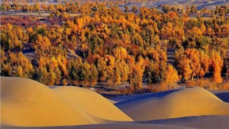曾经我国花一亿在沙漠里种胡杨,多年过去,长成什么样了?