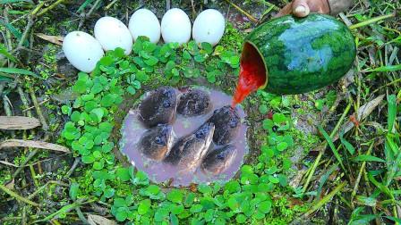 小伙野外发现神秘洞穴,将西瓜汁和鸡蛋倒进去后,却直呼赚到了!