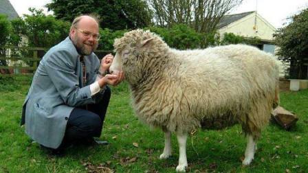 """为什么现在很少有人提起克隆?看看绵羊""""多莉""""下场,你就明白了!"""