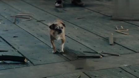 全场敢第一个站出来对付他的,居然是条狗