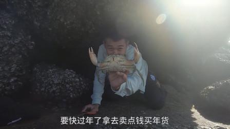 赶海小哥在一块万斤巨石下面抓获了5只老青蟹,拿去卖钱换点年货