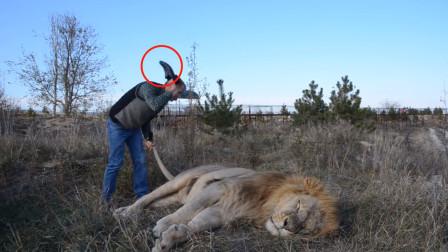 大胆男子教训起了狮子,手拿拖鞋大力拍打,男子:这我养的猫!