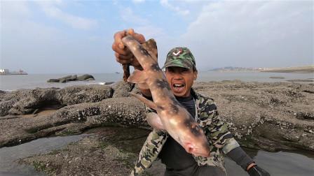 鲨鱼竟然躲在海边大水坑,来叔费尽精力把它擒住,今天赶海来对了