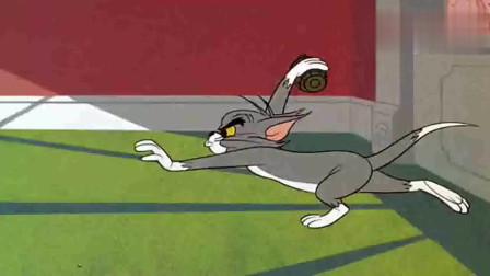 猫和老鼠:两只笨猫互相伤害,最终离开这个家,杰瑞也跟着走了