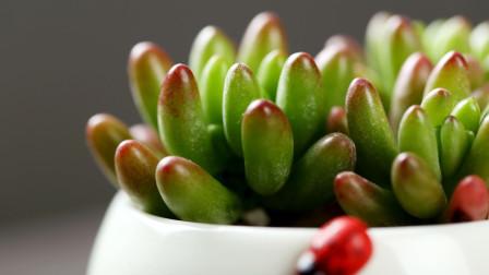 十二星座专属的多肉植物,选择一款和你五行相符的吧