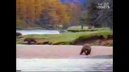 佛山无影腿vs黑棕熊 抢金枪鱼!