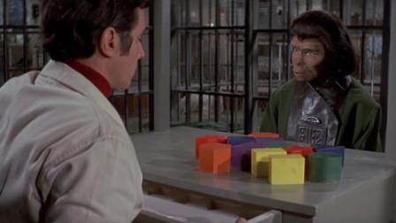 博士用玩具测试猩猩智力,可猩猩用玩具一番操作,把博士都惊到了