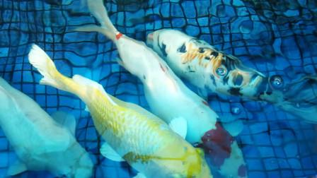 水族馆各种观赏鱼视频