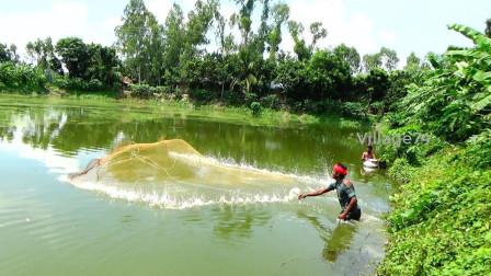 印度大叔往绿绿的水塘里撒一网,看看他捕获了啥?