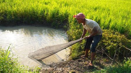 水稻田边的小水坑,农村小伙撒了一网,竟捕捉到这些大野货