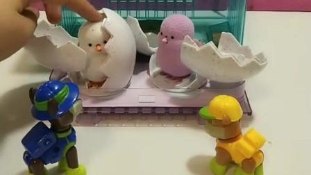 敖丙和哪吒冒充汪汪队,霸占了小鸡的家,莱德队长让他们献出了原形