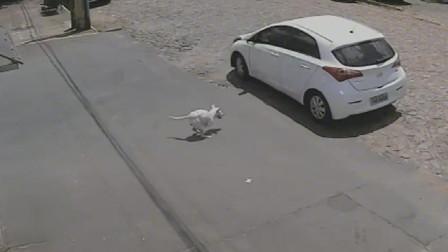 残缺的狗子就这样被主人无情的抛弃了,好可怜啊