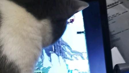 性感小猫咪在线观看 PDD玩小游戏,骚猪还是那么骚,尤其是叫声