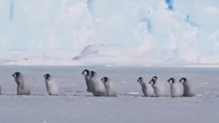 小帝企鹅排成整齐队列前进犹幼儿园的小学生,后方还有成年企鹅看护