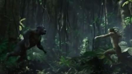 森林之王和丛林之王徒手单挑,到底谁会征服谁?