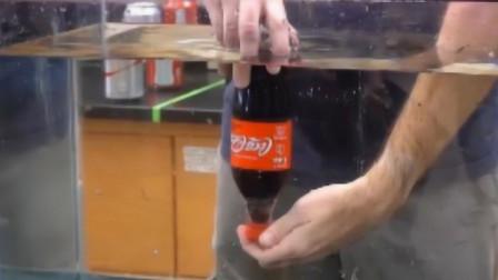 老外发明可乐新玩法,摇晃之后倒立放入水中,奇怪现象发生了