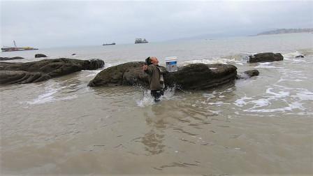 下雨天好多海鲜待在岸边,来叔捡不少值钱货,螃蟹海螺都比拳头大
